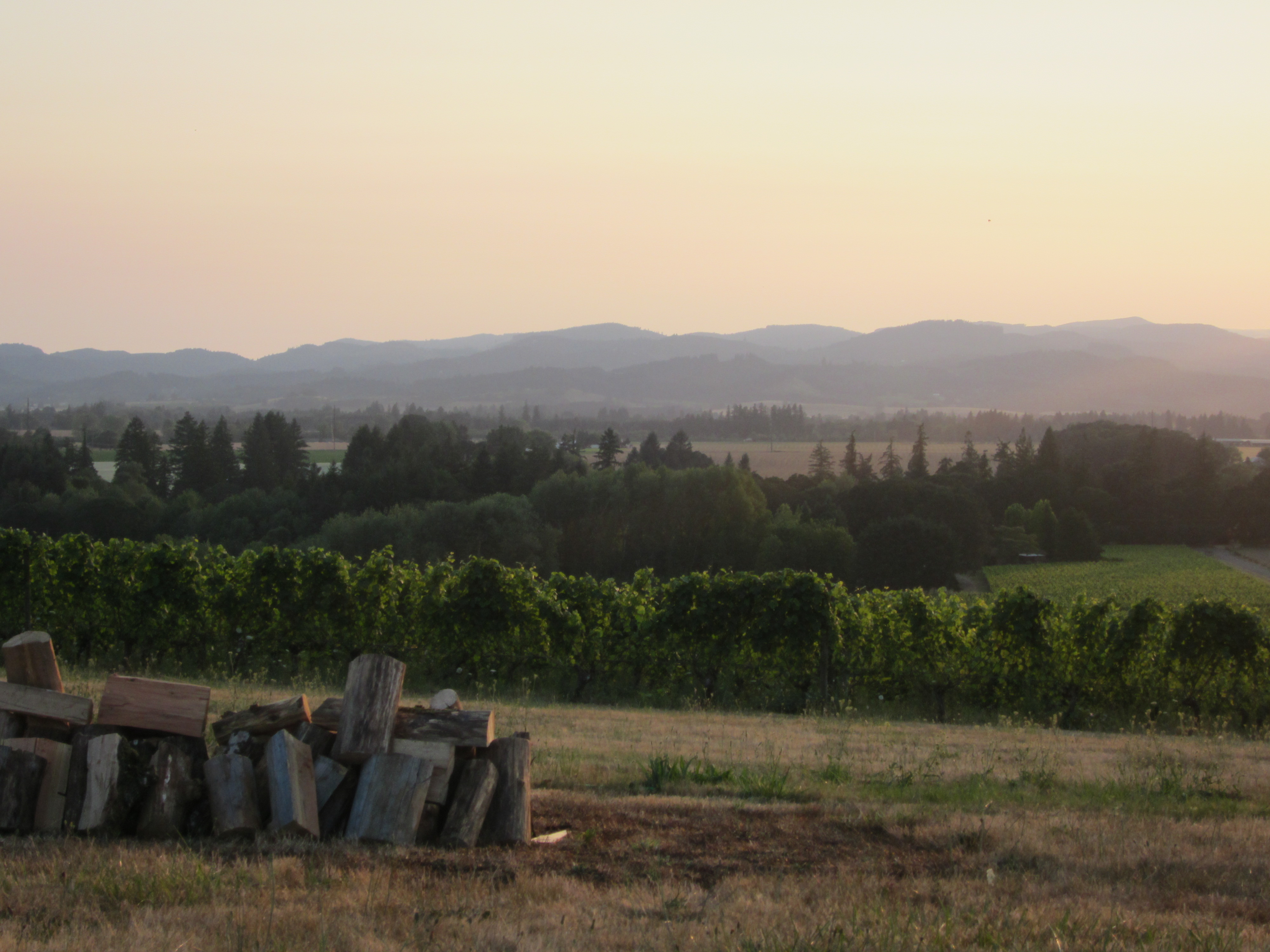 Beautiful setting out at Anne Amie Vineyards, overlooking the Willamette Valley.